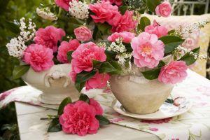 camellias-57d70ec13df78c5833728c2f