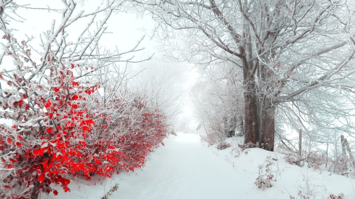 winter-flowers-wallpaper3