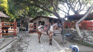 Dude ranch in San Nicolas