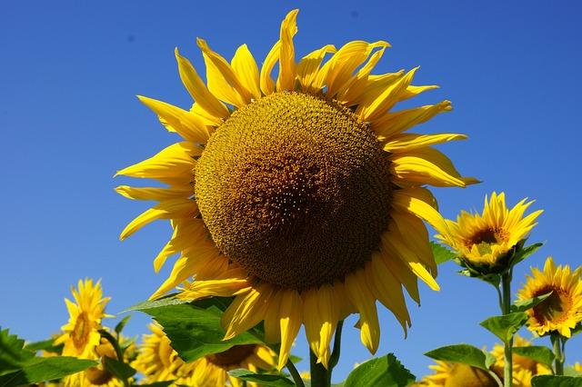 flower-649190_640