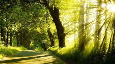 sun-light-forest-tree-road