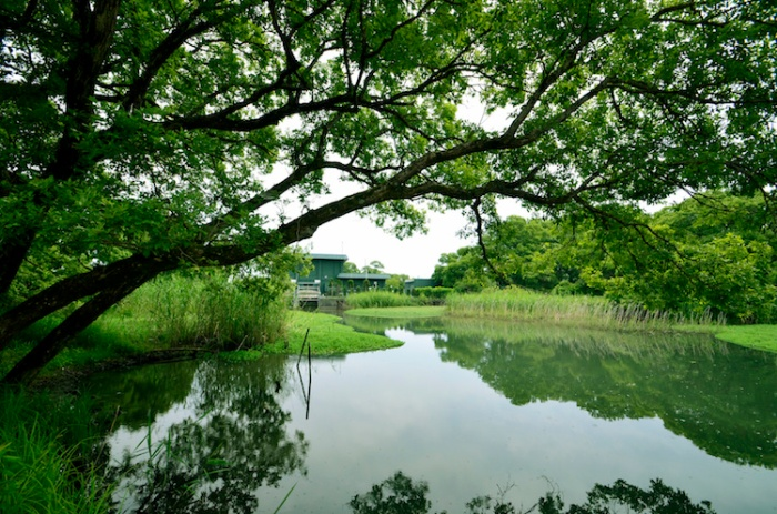 Japan's Secret Garden in biwa lake.