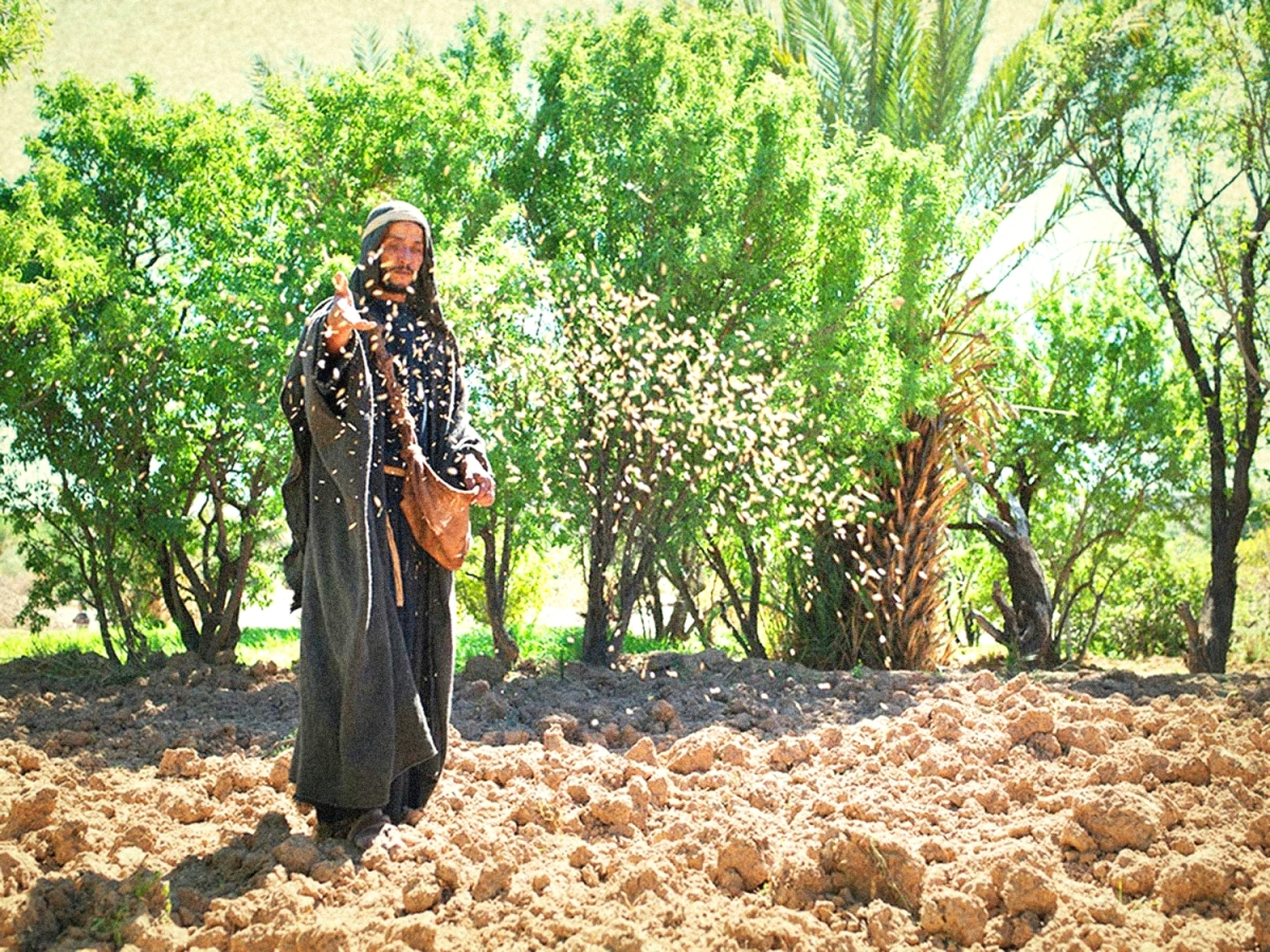Seeds Producing | Living Abroad