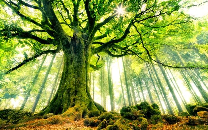 585571826-beautiful-tree-wallpaper.jpg
