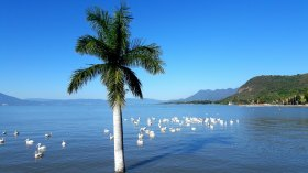 Visualize flocks of people being baptized in Lake Chapala