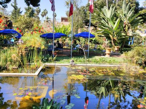 Ponds and garden at Neill James home which is now LCS in Ajijic