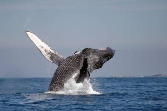 Whale watch wonders