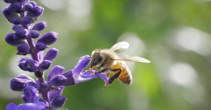 635938339093727386-honeybee