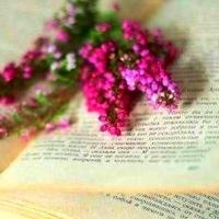 Reader Nooks