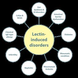 Lectin-Disorders