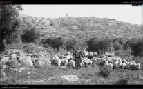 Shepherds in the desert of Bethlehem