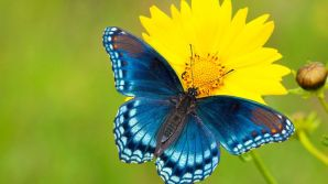 opt__aboutcom__coeus__resources__content_migration__mnn__images__2015__04__butterfly-a62daa89118a4967bfb1d719c97ddbdf