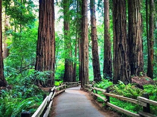 the-massive-redwood-trees