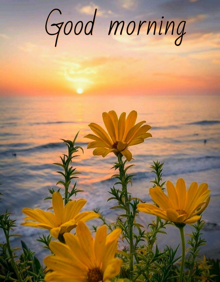 Nice-Pic-Of-Good-Morning-Sunrise-with-Flower